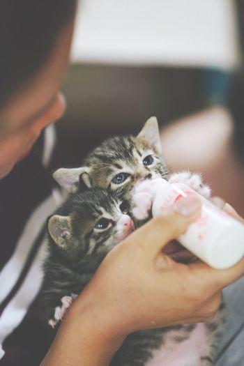 Cat Kitty Kitten 사라진 어미 대신 수유중