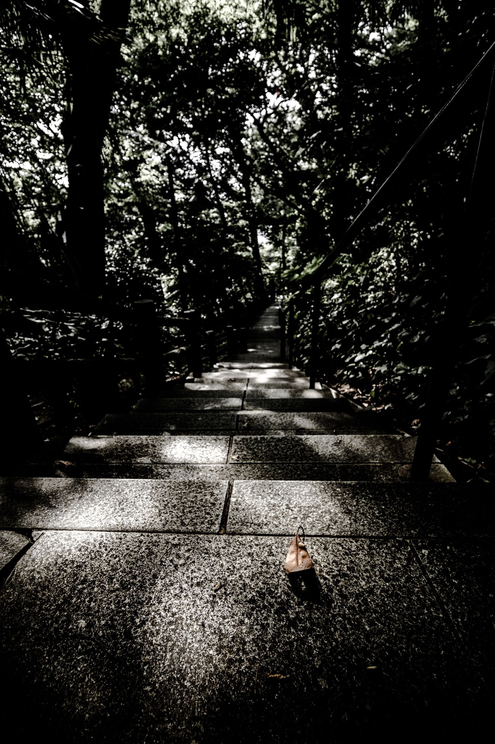 tree, the way forward, sunlight, shadow, footpath, diminishing perspective, street, transportation, walkway, road, park - man made space, empty, vanishing point, growth, outdoors, day, branch, nature, no people, pathway