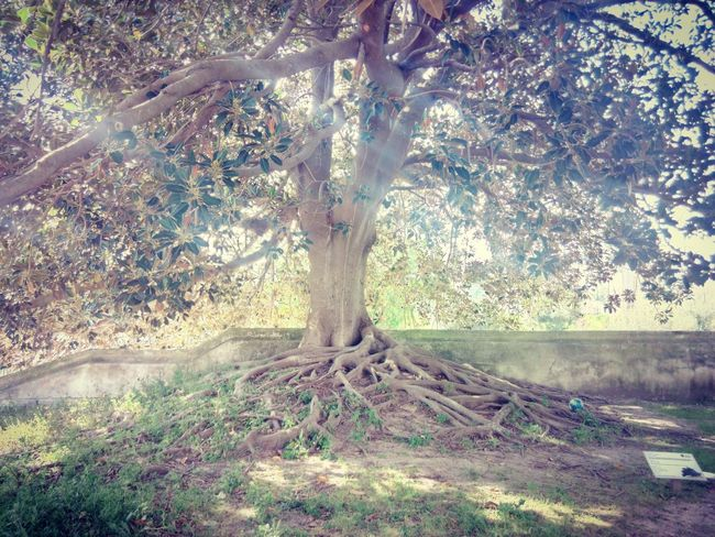 Big Tree Day Tree Outdoors No People Nature Growth Beauty In Nature Green Color Tree Wildlife & Nature Wildlife