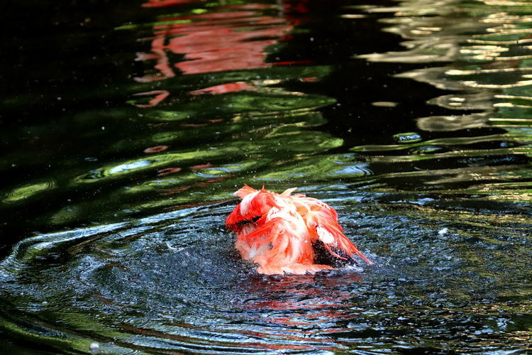 High angle view of fish swimming in lake