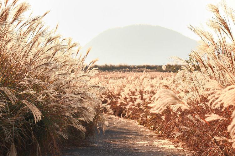 Reed Warm