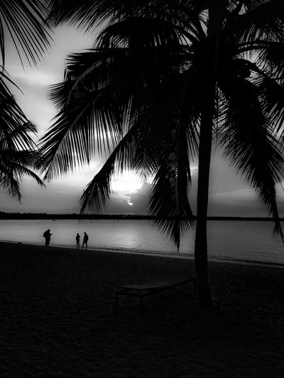 Palmtrees 3 Men Standing Sillouettes Trees And Nature Sunset Sea Sand EyeEm Best Shots The Week Of Eyeem Creative Photography Nature Photography Fine Art Photography Showcase July The Roll Cloudporn Dramatic Sky Blackandwhite Ripples In The Water Sun Rays Fine Art Artistic Golden Hour Picturesque Landscape_Collection Water_collection