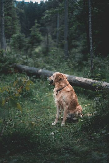 Dog Pets One Animal Mammal Outdoors Domestic Animals Animal Themes Tree No People Day Forest Nature