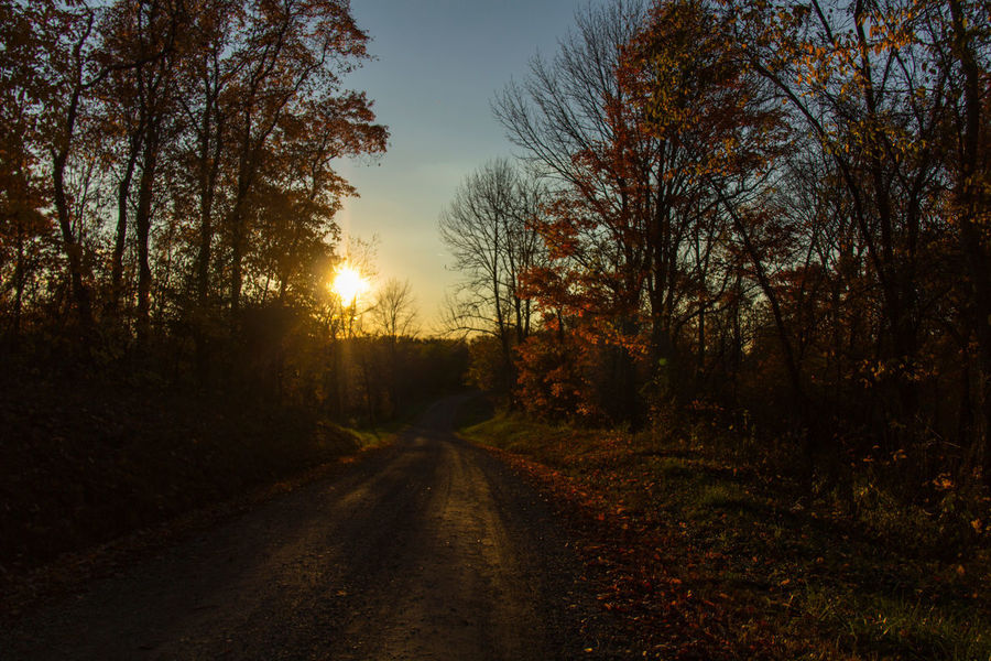 The road goes ever on, and on Tree Sunset Forest Road Sun Sunlight Autumn Sunbeam Sky Landscape