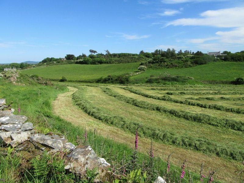 Mowed meadow Fieldscape Field Grassfield Meadow Harvesting Mown Field Grass Silage Fodder Dairyfarming Mizen Peninsula West Cork Wildatlanticway Ireland