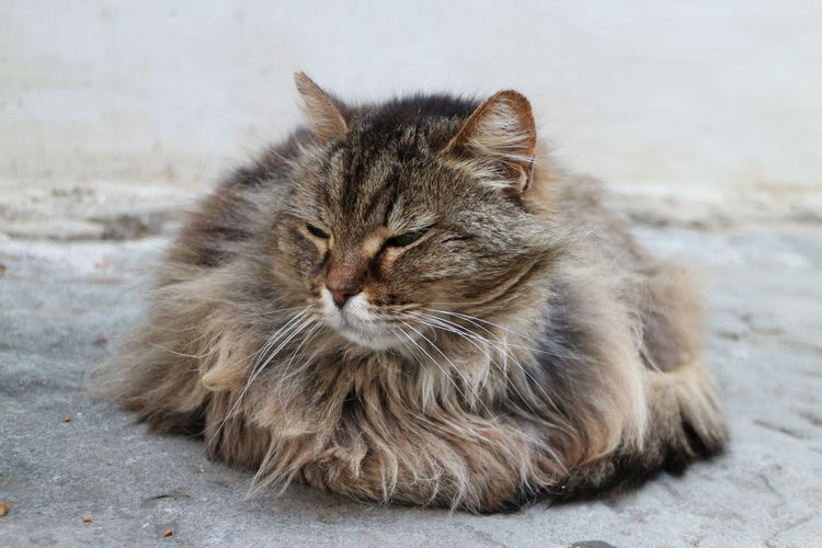 Front view of hairy cat sitting on ground