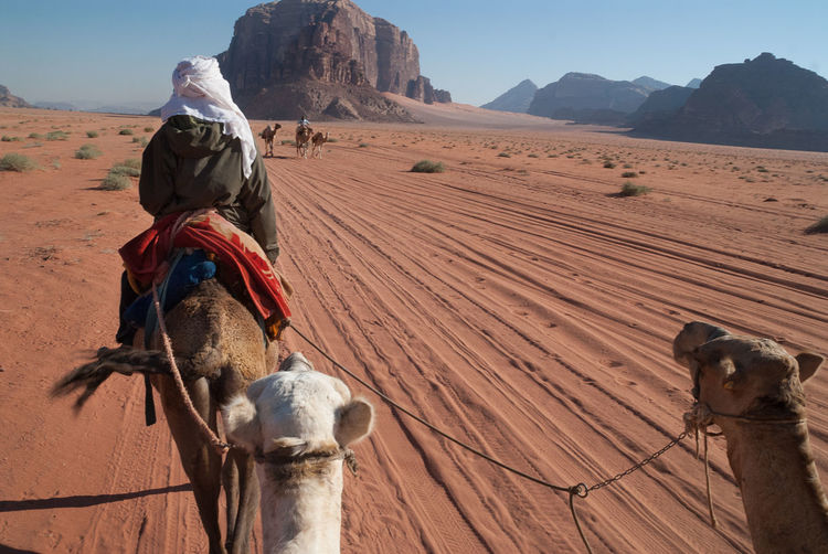 Camel ride across the Wadi Rum desert with nomadic berber guide Adventure Animal Themes Arid Climate Berber  Camel Riding Camels Desert Mammal Nature Nomadic Outdoors People Real People Saddle Sand Sitting Sky Sunlight Working Animal