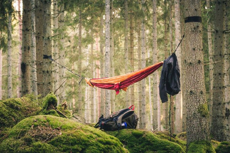 JOIN IN! | Hammock Hammock Time Nature Nature_collection EyeEm Nature Lover Eye4photography  EyeEm Gallery Trees Forest Wilderness Sweden Tree Nature Tree Trunk Outdoors Growth Day Beauty In Nature Adventure Men One Person People