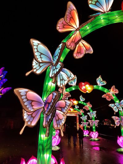 Zoo Antwerpen China Light Festival Taking Photos Black Background Multi Colored Celebration Butterfly - Insect