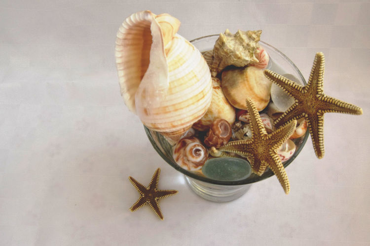 Art Close-up Decoration No People Ocean Ornate Sea Shell Shells Stars Still Life