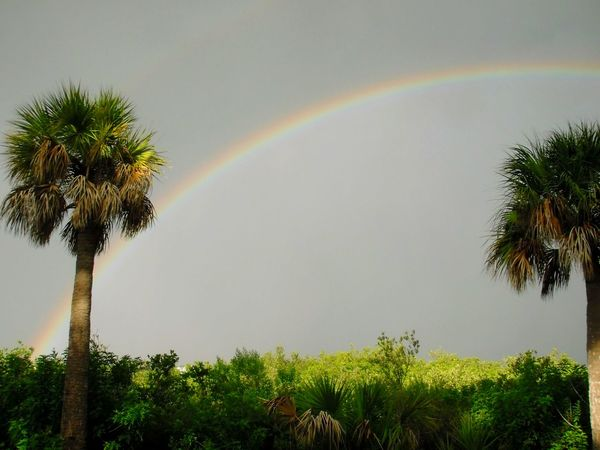 Rainbows Rainbow Palm Trees Florida Skies Weather Photography Sunshine Double Rainbows Double Rainbow Tropical Weather Landscapes Copy Space Negative Space