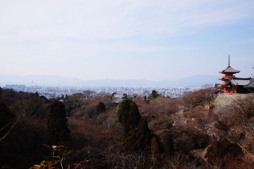 view of Kyoto Japan Japan Photography Kyoto City Politics And Government Tree Agriculture Sky Architecture Snowcapped Mountain Cityscape Mountain Range Scenics Tranquil Scene Idyllic Mountain Urban Scene Skyline