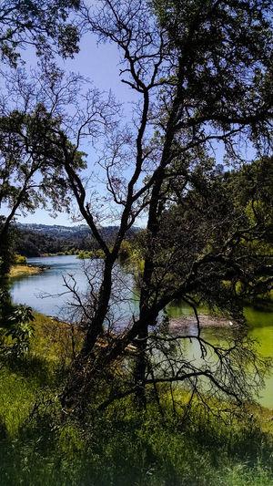 Traillifeusa California Nature Photography Naturelovers Tree Nature Oak Tree Oak Trees Lake View Lake Lake Life Landscapes