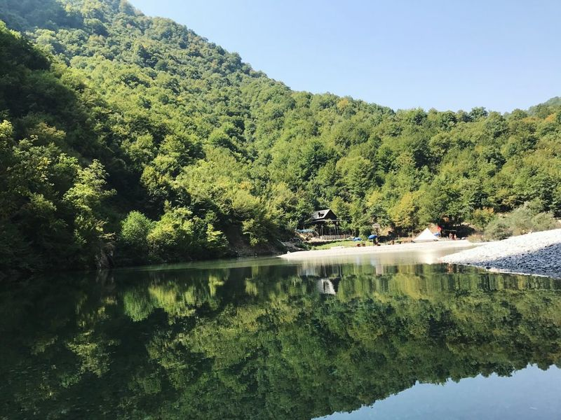 Reflection Tree Lake ALBANIA❤️