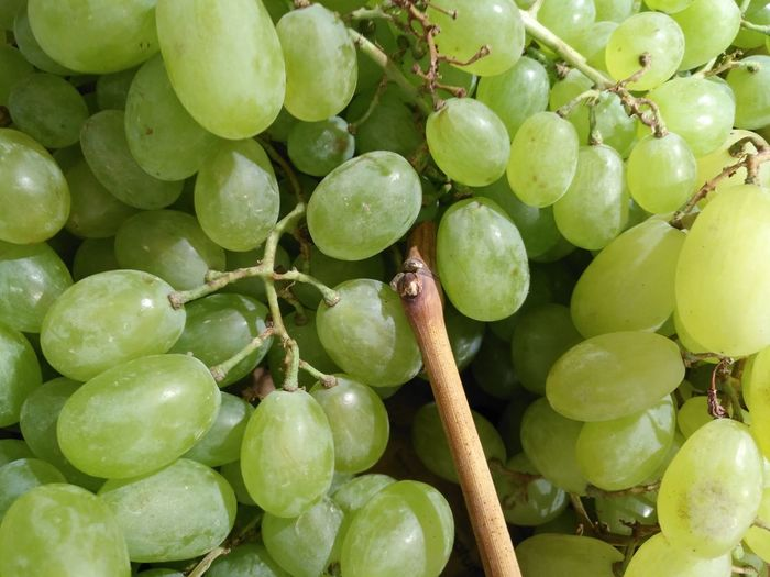 Fruit Tree Mediterranean Food Healthy Lifestyle Agriculture Grape Close-up Green Color Food And Drink