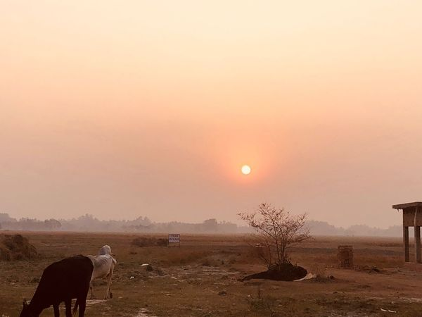 Sunset Nature Landscape One Animal Animal Themes Domestic Animals Beauty In Nature Sun Arid Climate Sky Field Outdoors Mammal Scenics Moon Tranquil Scene Tree Tranquility No People Desert Beauty In Nature Tree Clear Sky Randomshot