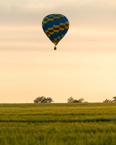 A lone low flying hot air balloon passing over a yellow crop field at sunset. Adventure Air Vehicle Balloon Ballooning Festival Beauty In Nature Environment Field Flying Grass Green Color Growth Hot Air Balloon Land Landscape Mid-air Nature No People Outdoors Plant Scenics - Nature Sky Sunset Transportation