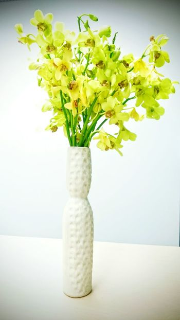 Green and flower and white vase... Make an attraction.. Taking Photos Relaxing Enjoying Life My Hobby