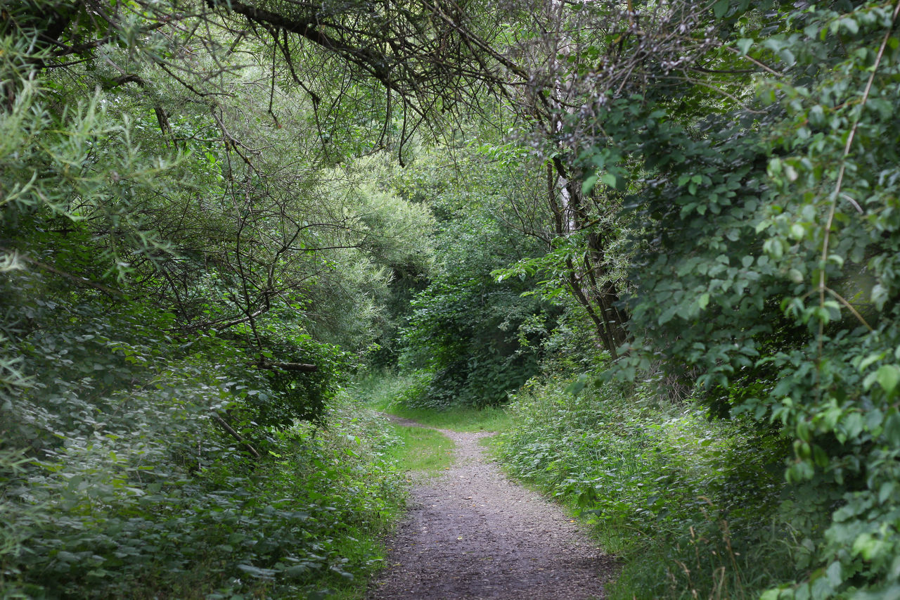 TRAIL AMIDST PLANTS IN FOREST