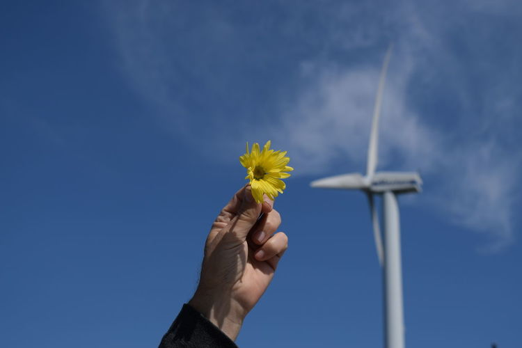 Hold yellow flower Beauty In Nature Blue Clear Sky Close-up Day Flower Flower Head Fragility Freshness Holding Human Body Part Human Hand Low Angle View Nature One Person Outdoors People Real People Sky Sunflower Wind Power Wind Turbine Windmill Yellow Inner Power