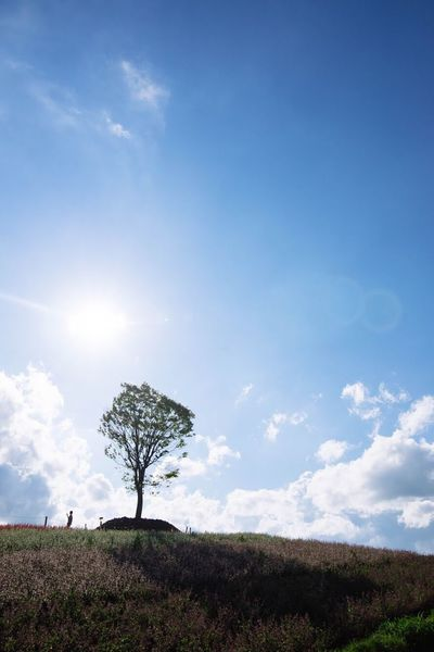 Japan Landscape Sky Cloud - Sky Tree Nature Field Grass Tranquil Scene Beauty In Nature Day Outdoors Tranquility Blue Scenics Growth Lone Rural Scene Furano