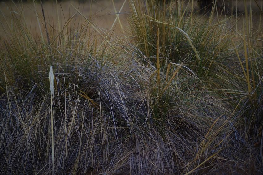 Beauty In Nature Close-up Day Grass Growth Nature No People Outdoors Tranquil Scene Tranquility