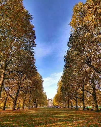 Beautiful colours in Green Park. One of mine short walks during my lunch break. Greenpark Autumn Park Yellow Sky Trees Nature Autumnleaves Autumncolors Warm Walk Bestoftheday London Westminster Peaceful Lunchbreak Beautifulday