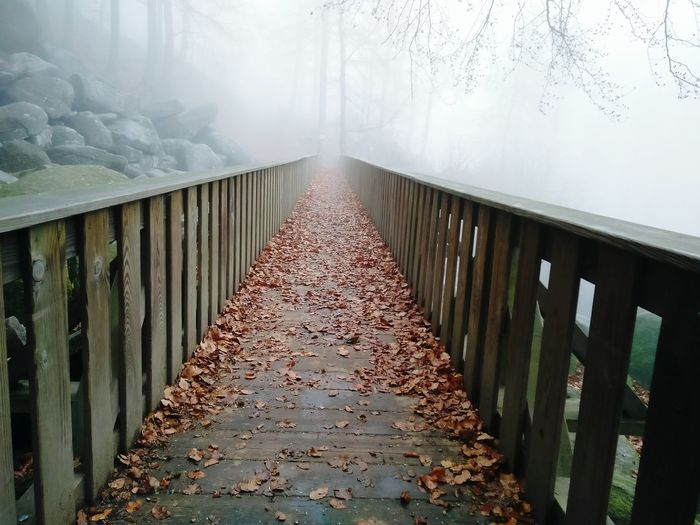 Fog Tree Nature Day No People Outdoors The Way Forward Cold Temperature Foggy Day Landscape_photography Stones N Rocks Nature Photography Sunday Hike Nature Beautiful Trip Cold Tree Leaves Bridge Forest