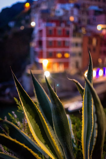 Close-up of illuminated plant against building at night
