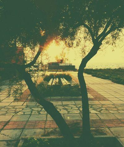 Imagination Sun And Trees