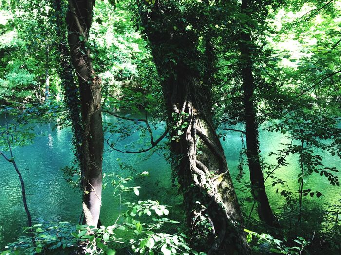 Grüner Dschungel an der Isar, Green Water Dschungel Tree Plant Growth Nature Green Color Day Beauty In Nature Land Tranquility Forest No People Outdoors Water Sunlight