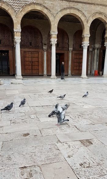 Pigeons in a building