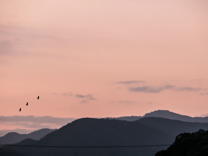 Silhouette birds flying over mountains against sky during sunset