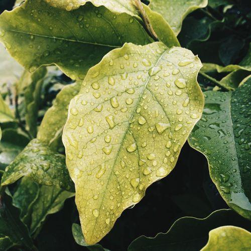 It's rainy today ☔️ Rain Drops VSCO