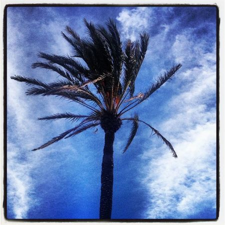 Dear palmtree, I sincerely love you. Beach Nature Sky Love