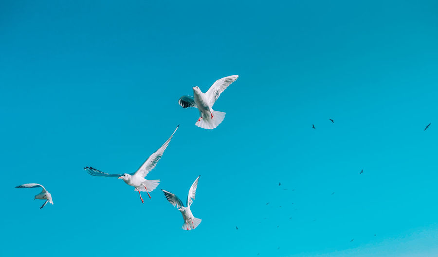 Low angle view of seagulls flying over sea