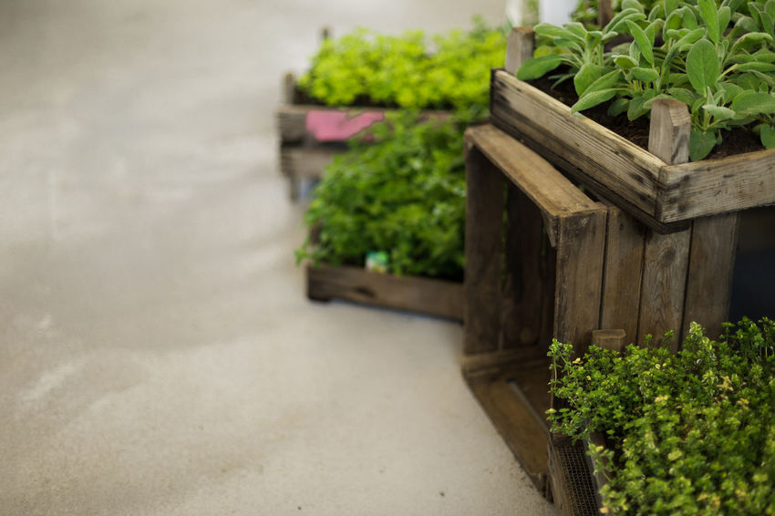 herb gardening Cooking Beauty In Nature Box Close-up Container Day Focus On Foreground Food Food And Drink Freshness Green Color Growth Herb In A Row Leaf Nature No People Outdoors Plant Plant Part Potted Plant Wood - Material