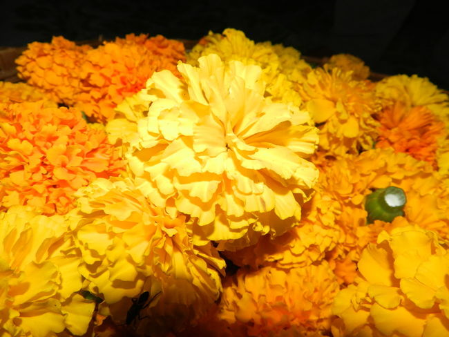 Beauty In Nature Blooming Close-up Day Flower Flower Head Fragility Freshness Marigold No People Outdoors Petal Yellow