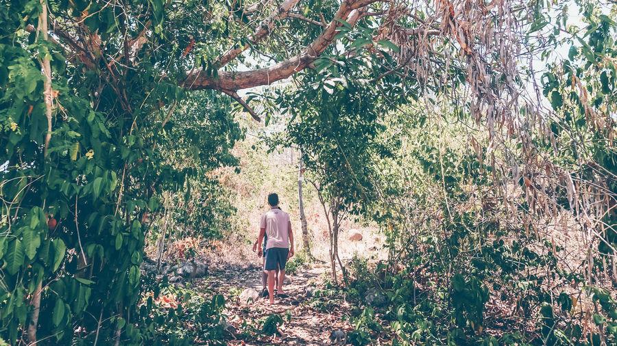 Plant Tree Rear