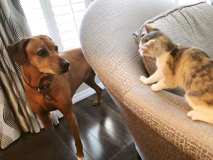 Frenemies Ceasefire Truce Frenemies Dog Animal Themes Animal Mammal One Animal Pets Vertebrate Domestic Domestic Animals Indoors  Cat Feline Domestic Cat No People Whisker Canine Home Interior