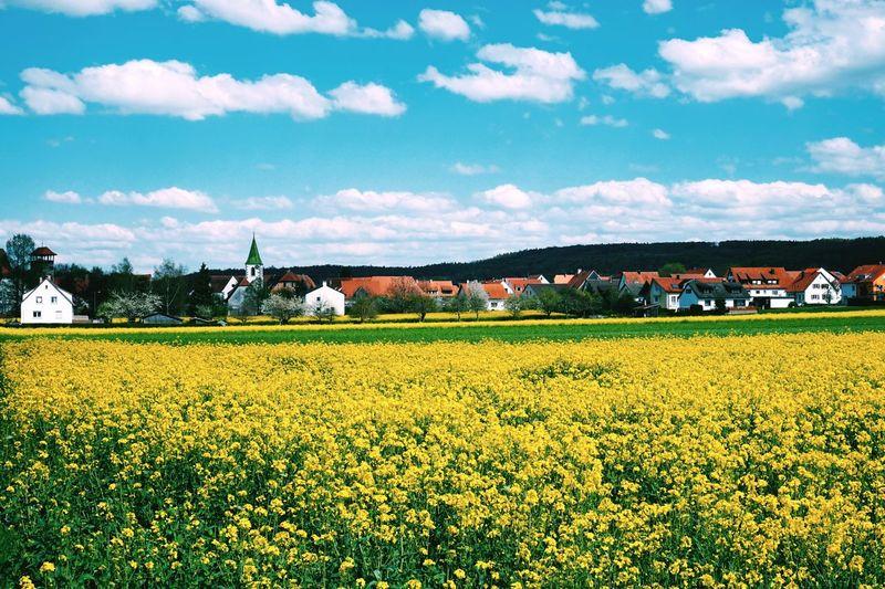 Rapeseed field in bloom nearby town against cloud sky