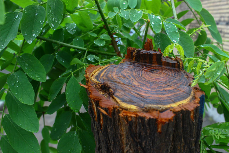 Bark Beauty In Nature Close-up Day Deforestation Focus On Foreground Green Color Growth High Angle View Leaf Metal Nature No People Outdoors Plant Plant Part Tree Water Wood - Material