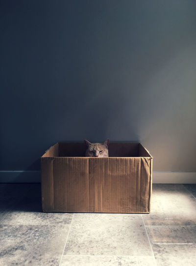 It's a cat in a box! Symmetrical zen style Box Cardboard Box Symetry Animal Themes Cat Cat In A Box Cats Contrast Day Indoors  Mammal No People One Animal Pets Shadows Sitting Symmetrical Symmetry Zen Zen-like