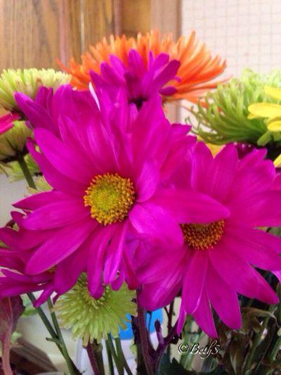 Sunday flowers... Eye Em Best Shots -Flowers EyeEm Best Shots - Nature Flowerporn Flower Collection