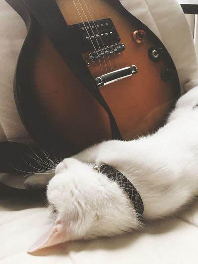 EyeEm Selects One Animal Domestic Cat Close-up Indoors  Animal Themes Pets Guitar EphiphoneGuitar
