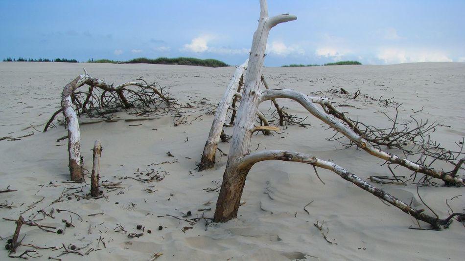 Barren Landscape Denmark Dune Migrating Dune Nature No People Outdoors Remote Råbjerg Mile Sand Skagen Tranquility Tree