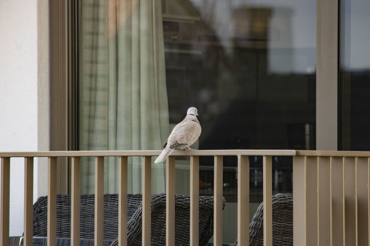 Bird perching on window