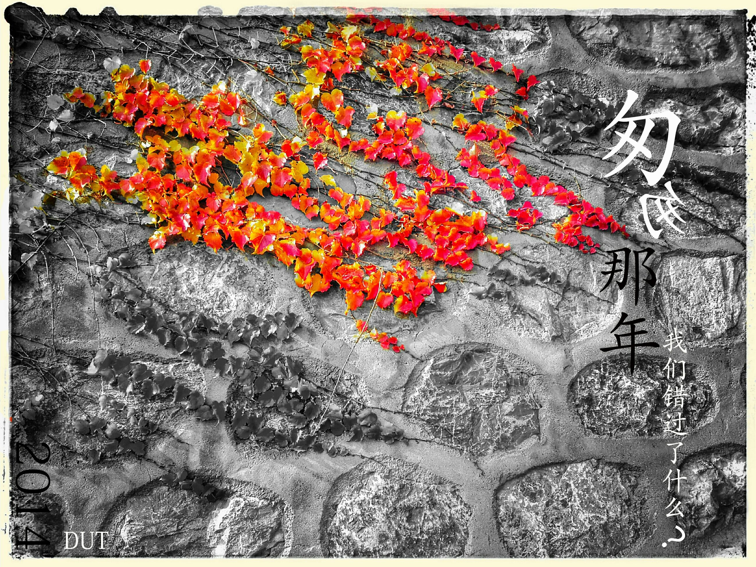 transfer print, auto post production filter, flower, red, growth, freshness, petal, beauty in nature, fragility, nature, orange color, plant, season, autumn, blossom, outdoors, day, blooming, in bloom, change