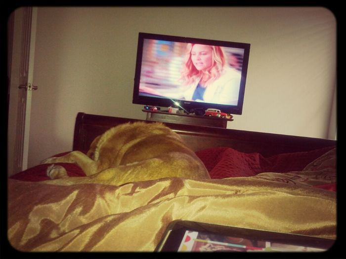lazy morning in bed with Wrigley watching greys anatomy.