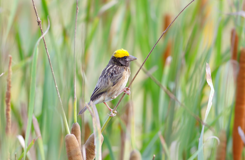 Bird Animal Animal Themes Vertebrate Plant One Animal Animal Wildlife Animals In The Wild Perching Day Nature Growth Grass Yellow Green Color Focus On Foreground No People Beauty In Nature Outdoors Land